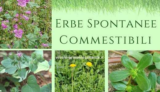 erbe-spontanee-commestibili