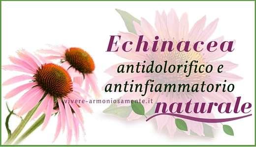 echinacea-proprietà-infuso
