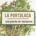 proprietà-portulaca-oleracea