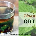 tisana-all-ortica