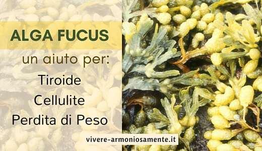 alga-fucus-per-dimagrire