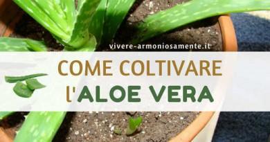 Come Avviare la Coltivazione dell'Aloe Vera in Casa