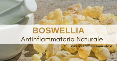 Boswellia: Potente Antinfiammatorio. Usi e Controindicazioni