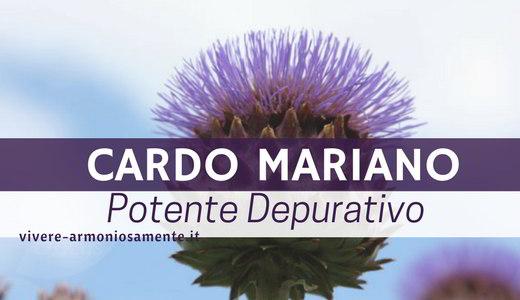 cardo-mariano-proprieta