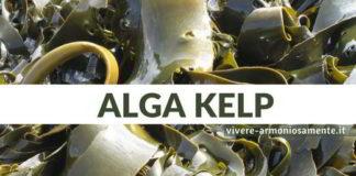 alga kelp proprietà