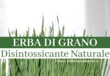 erba di grano proprietà